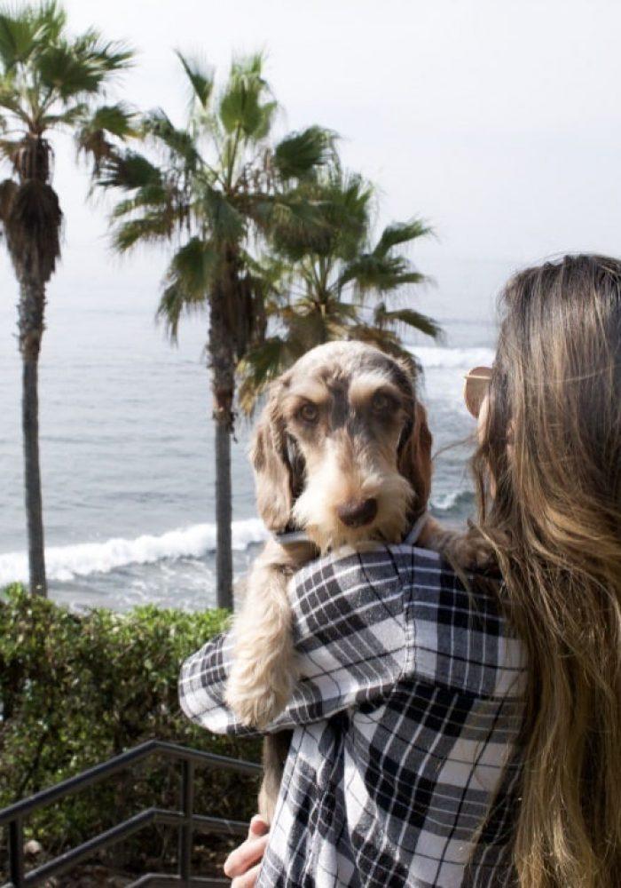 Dachshund Puppies For Sale | Marissa Rose Dachshunds